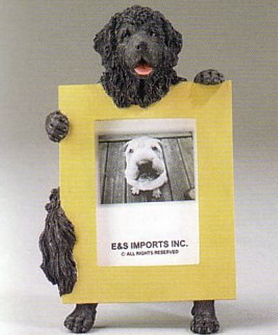 "Newfoundland - Dog Photo Frame 2 1/2"" x 3 1/2"""