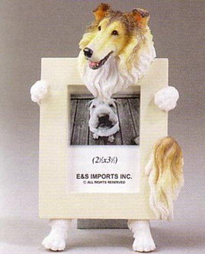 "Collie - Dog Photo Frame 2 1/2"" x 3 1/2"""