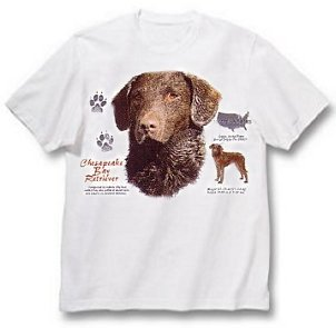Chesapeake Bay Retriever - T Shirt - History