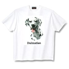 Dalmatian - T Shirt - Canine World