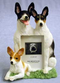 "Rat Terrier - Dog Photo Frame 3 1/2"" x 5"""