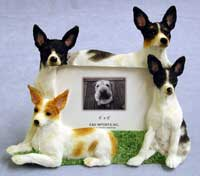 "Rat Terrier - Dog Photo Frame 4"" x 6"""