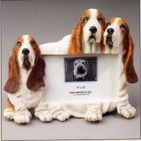 "Basset Hound - Dog Photo Frame 4"" x 6"""