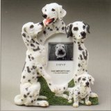 "Dalmatian - Dog Photo Frame 3 1/2"" x 5"""